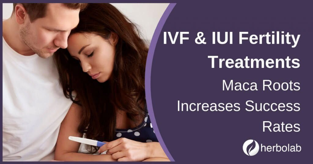 ivf and iui fertility treatments maca roots success