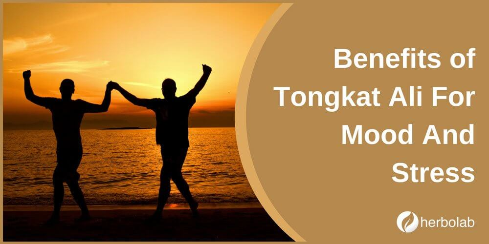 Benefits of Tongkat Ali For Mood And Stress
