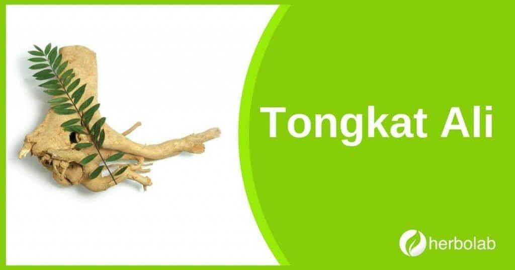 tongkat-ali-supplement