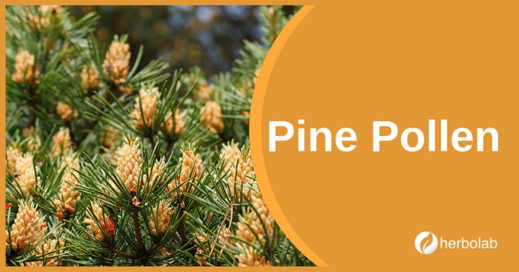 pine-pollen-supplement